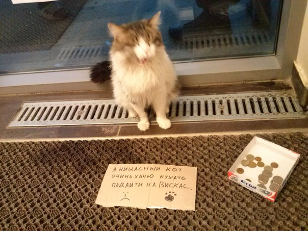 Кот просит деньги