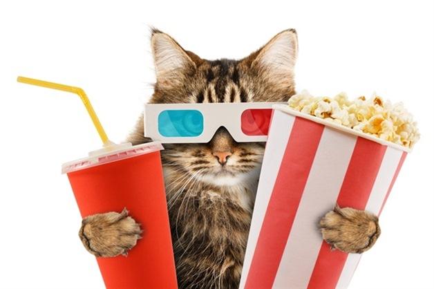 Коты в кинозале
