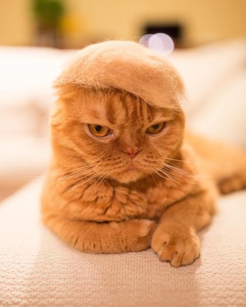 Кот и его деятельность