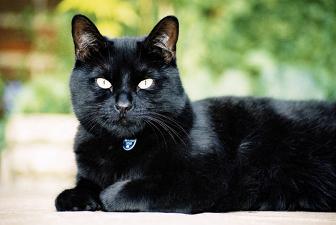 Кошка с этим неординарным окрасом издавна считается неотъемлемым...