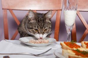 Кормить кота макаронами