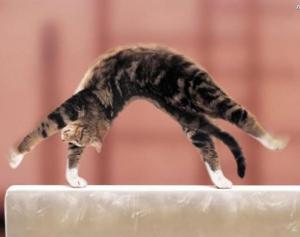 Гимнастика для кошек
