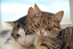 Если в дом к взрослому коту принесли котенка