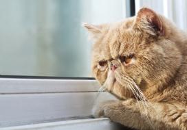 Кот хочет на улицу орет