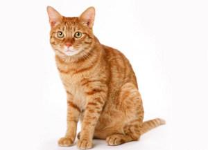 Как узнать сколько лет коту по их