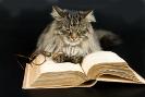 Происхождения и история домашних кошек