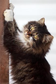 Отучение кошек от вредных привычек