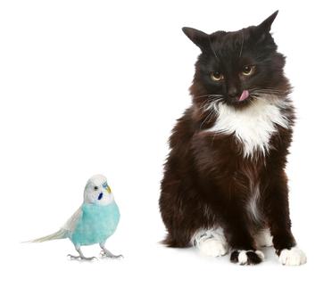 Как подружить кошку с мелкими домашними животными